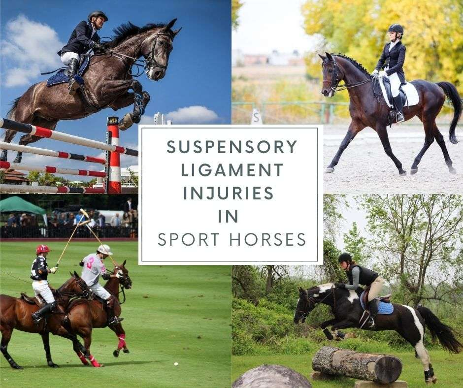 suspensory ligament injuries