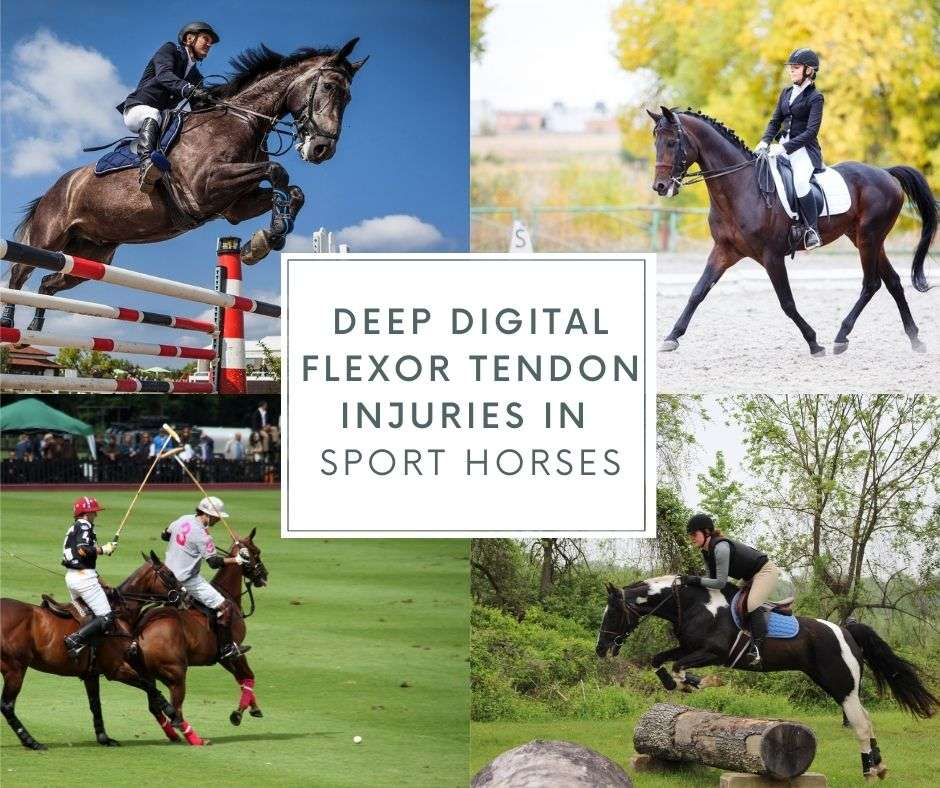 ddft deep digital flexor tendon injury
