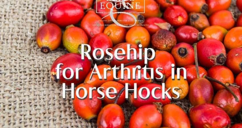 arthritis in horse hocks
