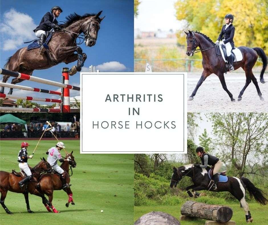 arthritis in horses