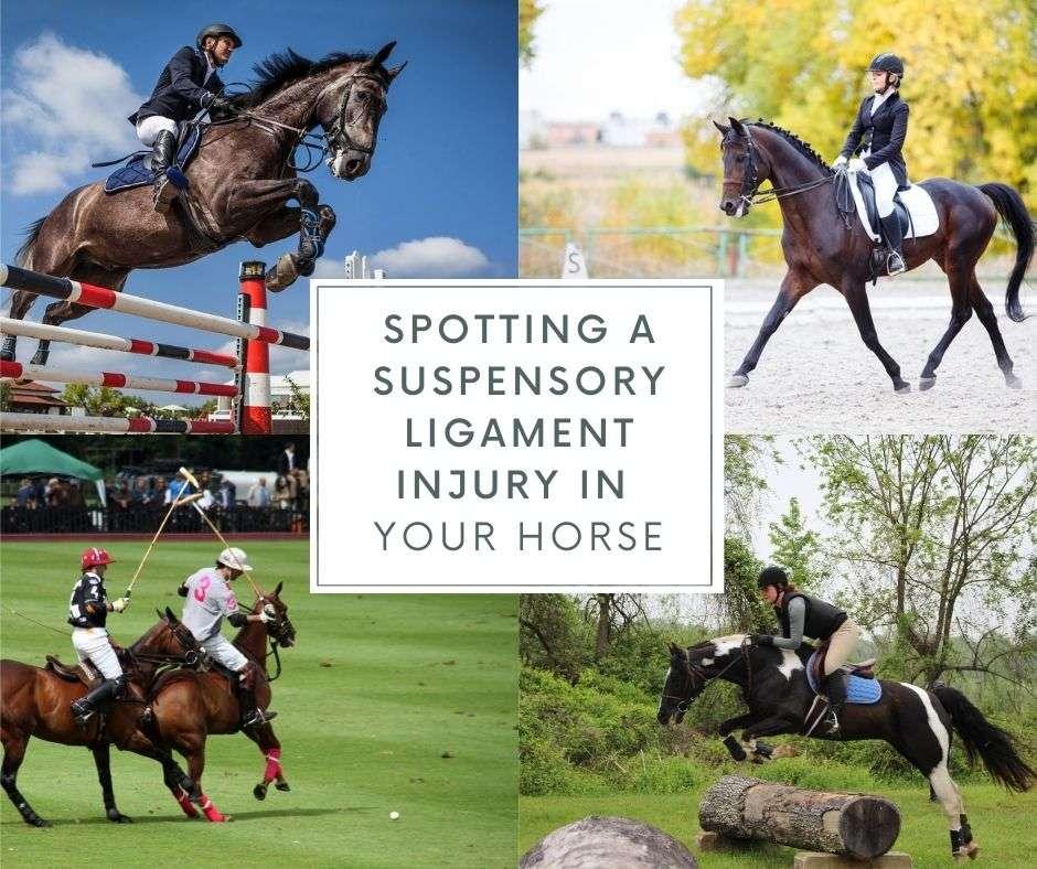 suspensory ligament injury horse