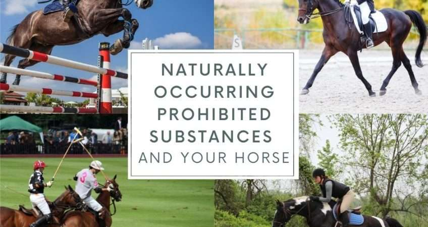 NOPS and your horse