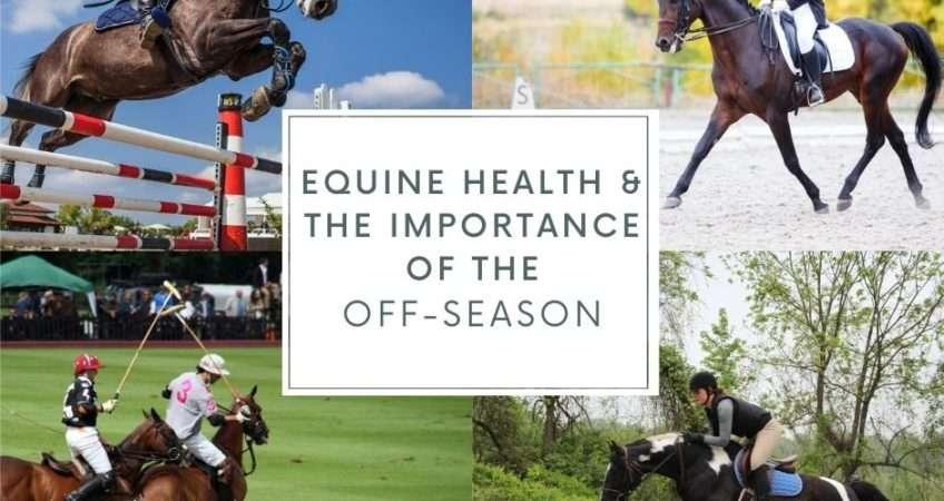 equine off-season