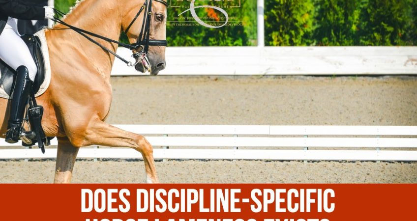 Dressage horse in ring