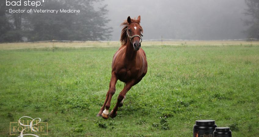 running horse over green grass