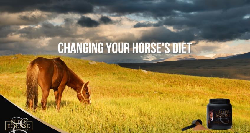 horse grazing in green fields