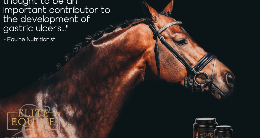 chestnut horse with bridle against black background