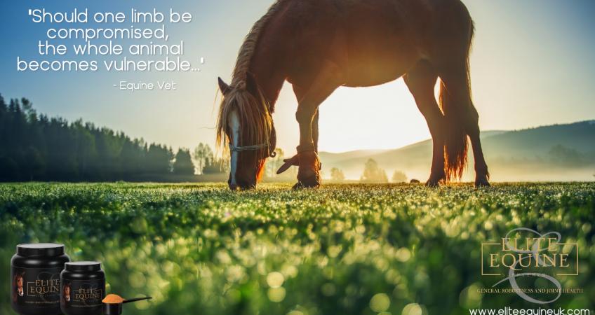 horse eating short grass against blue sky